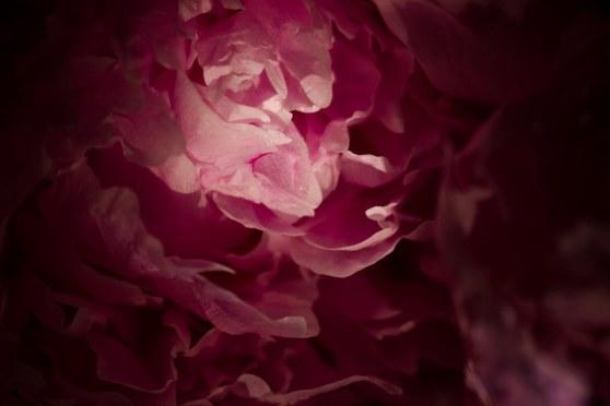 En Sueño Rosa