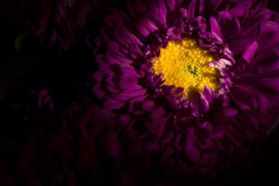 En Sueño Violeta